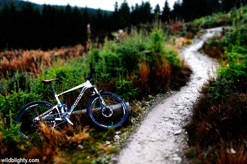 Coed Llandegla Red trail