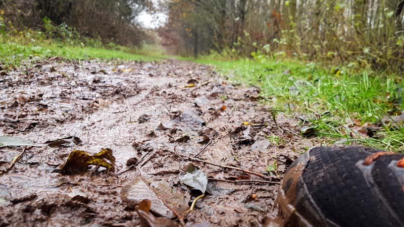 The Delamere Wild Trail in winter