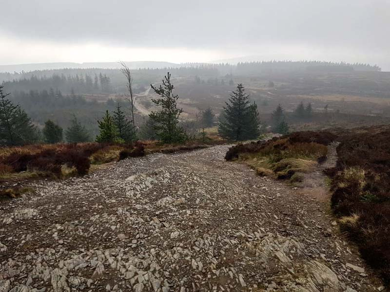 Moel Famau rocky trail with forest views