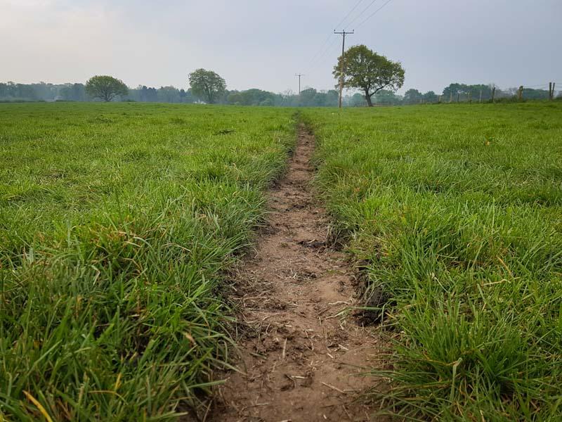 Dairy pasture with muddy path